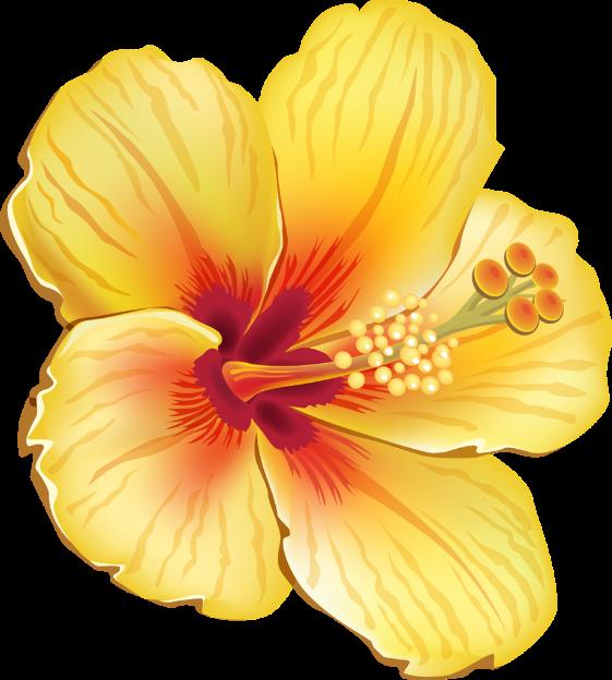 render Hibiscus amarilla