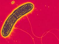 """Bakteri """"Geobacter Metallireducens"""" Penghasil Listrik Dikembangkan di Jepang"""