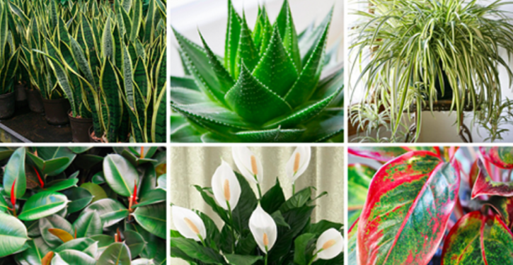 Put At Least One Of These 6 Plants In Your Home To Purify The Air And Eliminate Toxins