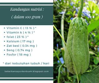kandungan nutrisi dari labu siam
