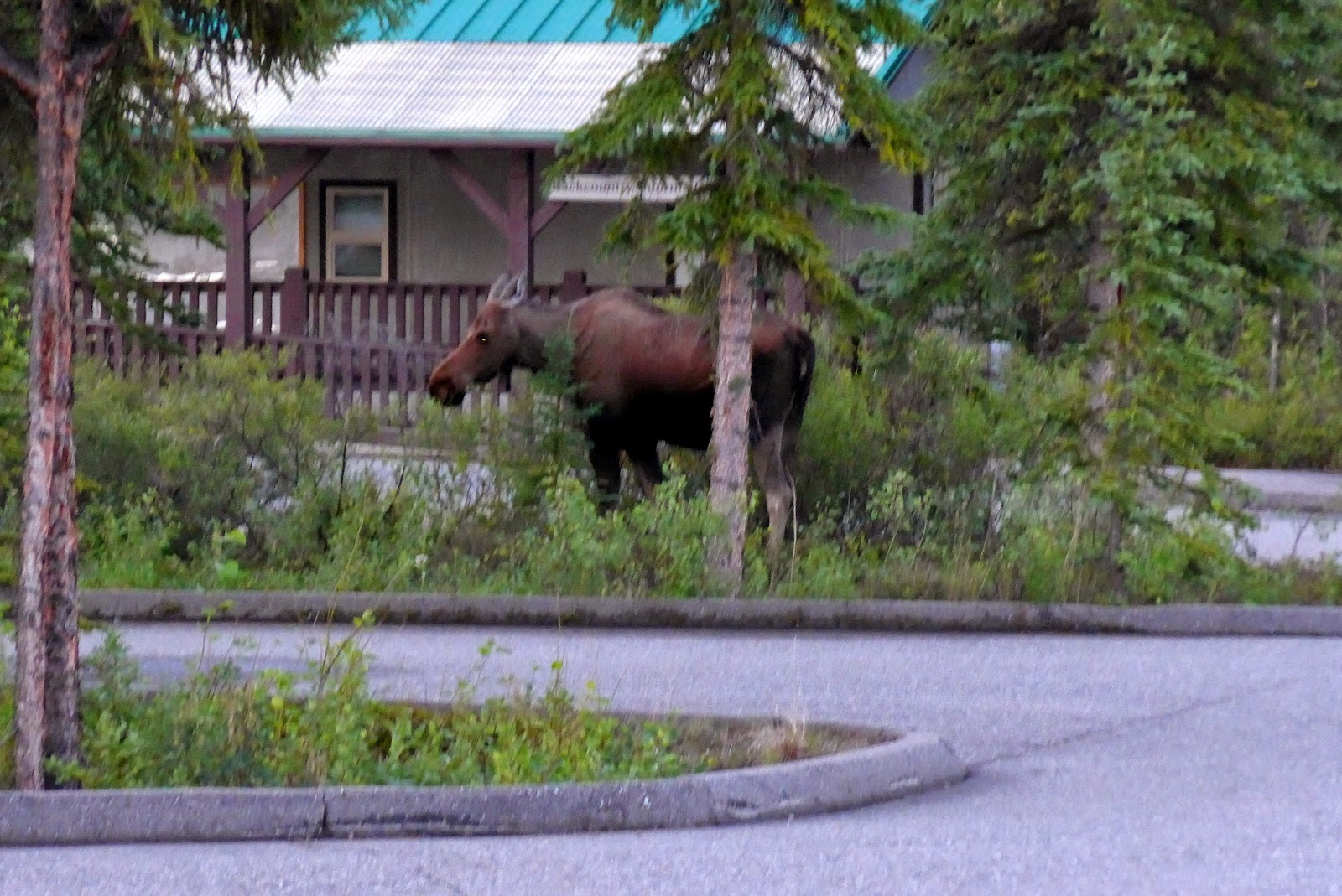 Moose at the Entrance of the Park's Visitor Centre