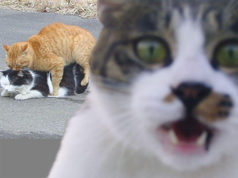 Cats Havin Sex 103