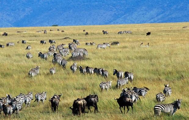 Pengertian Ekosistem Komponen Dan Macam Macamnya Trend Ilmu