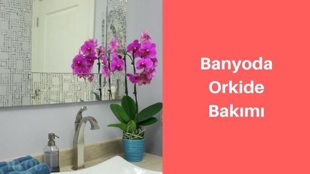Banyoda orkide bakımı