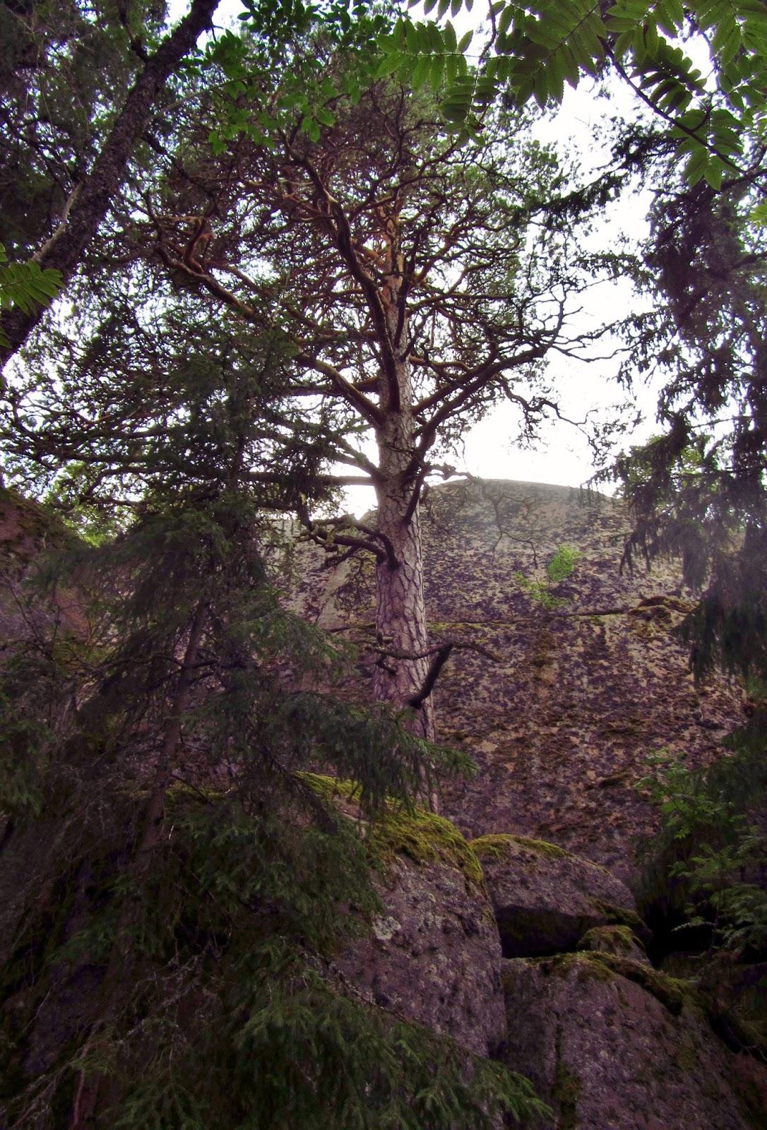 Kivimaa