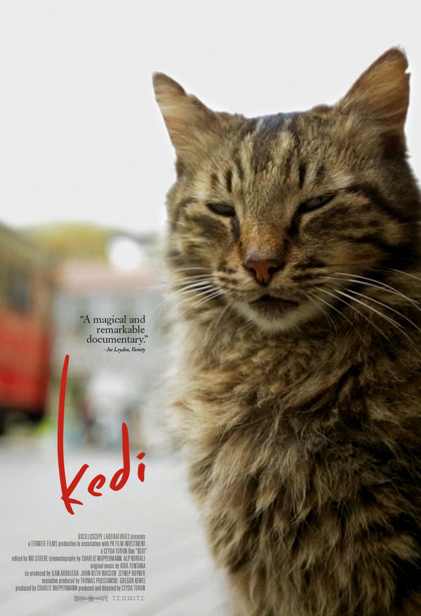 kedi cats in istanbul poster