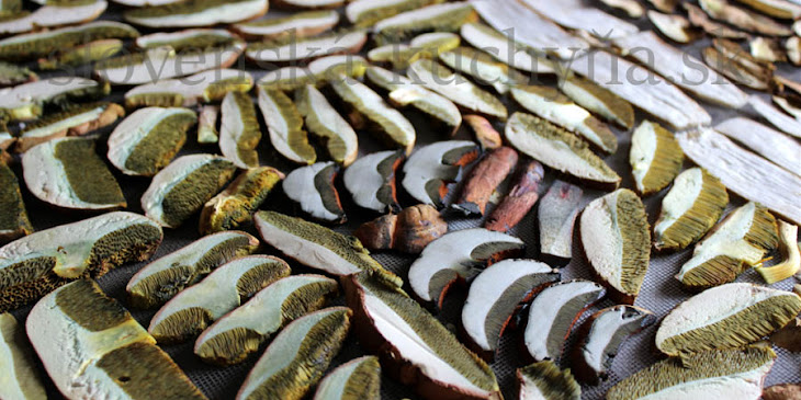 Sušené huby