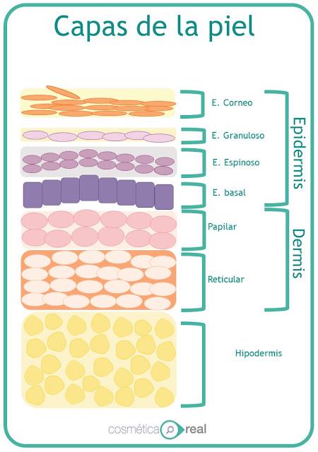 Peeling o Exfoliantes químicos: Que tipos existen