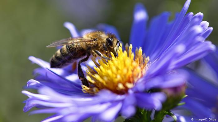 Lebah pelacak informasi?