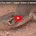 The Reptiles of the Desert | Unseen Videos of Monitor Lizard, Snake, Cobra 2017