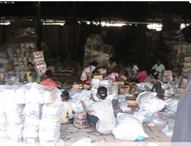 "Big Bos Pengusaha Arang ""Gundulkan Hutan Mangrove Barelang"", Dinas KP2K Kota Batam Tutup Mata"