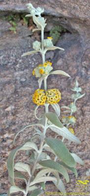flora nativa