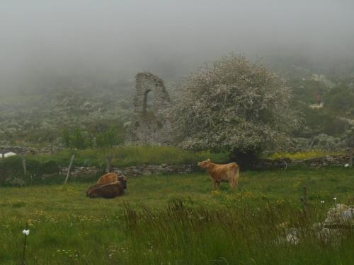 Camino, Jola Stępień