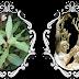 """""""Mitiche"""" piante"""