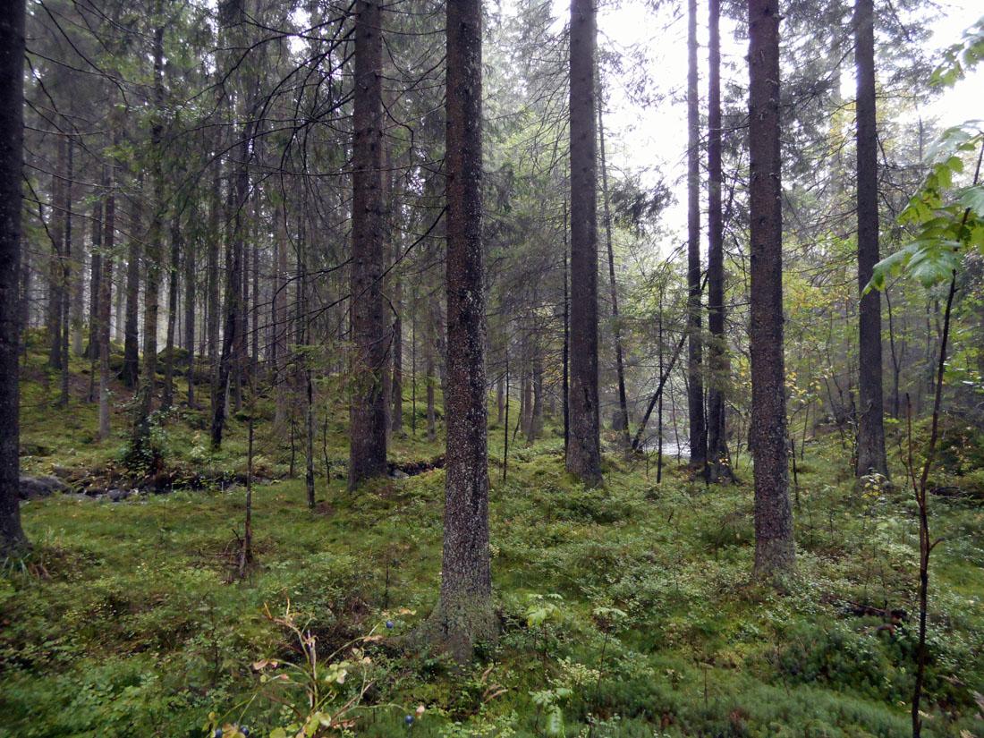 Boschi fuori Borås
