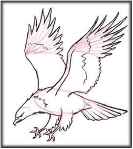 930+  Gambar Burung Elang Yang Mudah Digambar  Terbaru Gratis