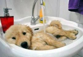 como evitar que el perro se rasque