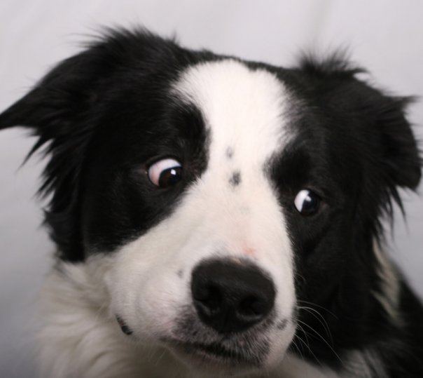 funny looking cats and dogs - photo #4