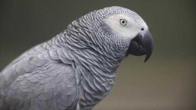 Ο παπαγάλος που παραγγέλνει φρούτα μέσω της Amazon