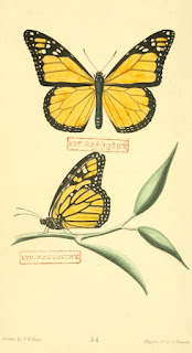 Entomology (insects) illustration books  Read online or download.