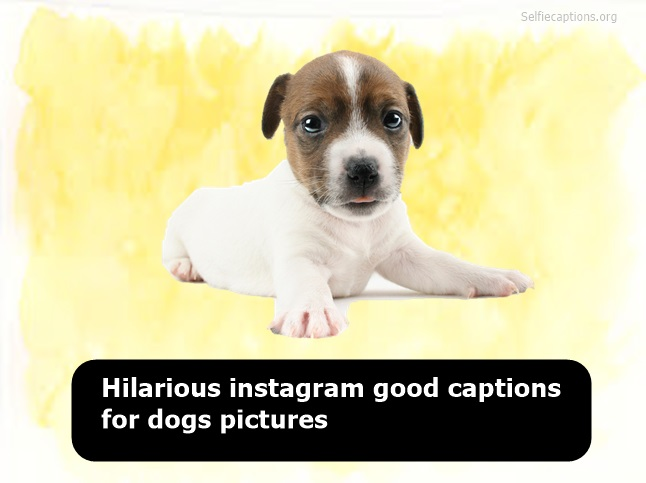 funny dog captions for instagram