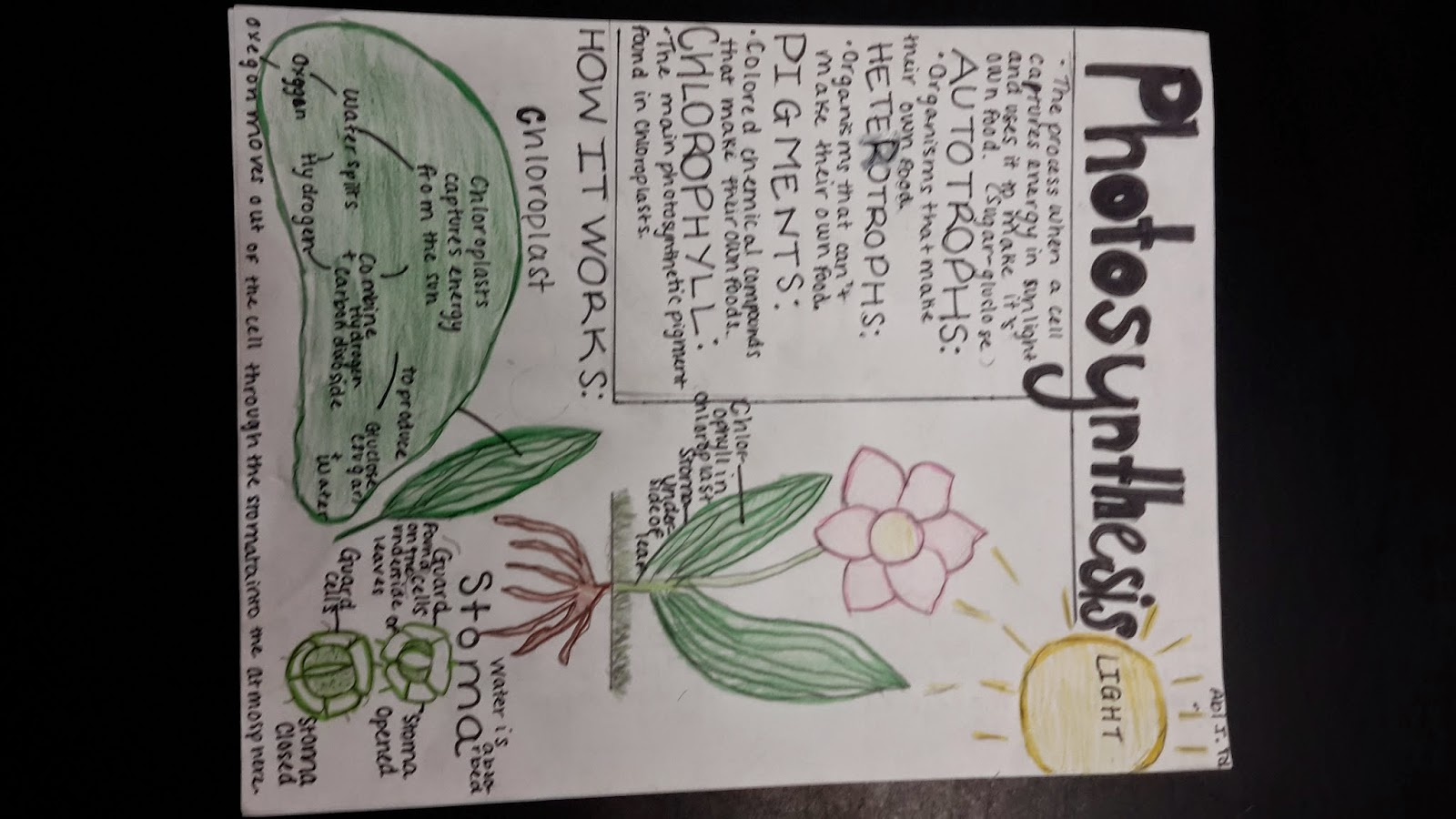 7th Grade Science Photosynthesis Activity