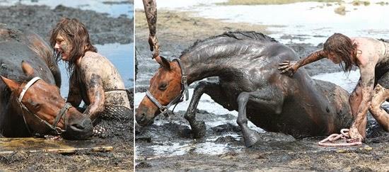 animal preso na areia movediça