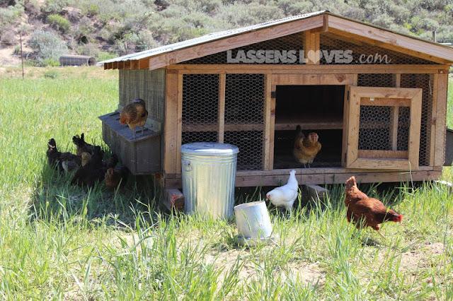 lassensloves.com, Highwood+Farm+Eggs