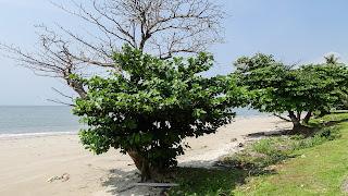 Amazing beach views in Gabon