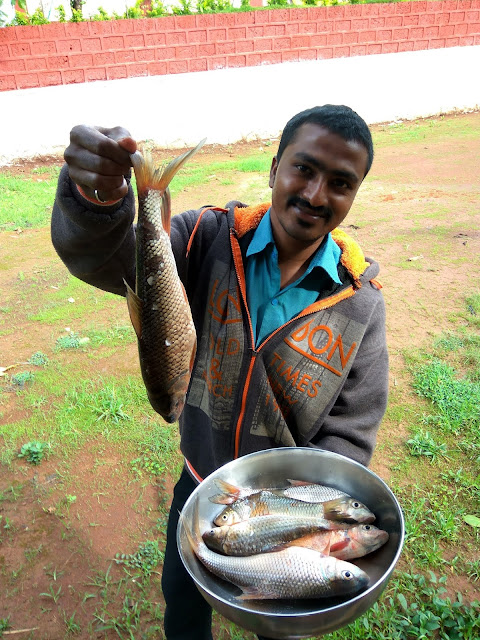 fish kolas homestay koyna river