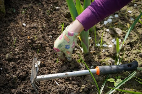 Inexpensive Mini Garden Project
