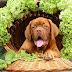 Επιτρέπονται τα σταφύλια στον σκύλο;....