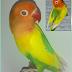 Mengenal Lovebird Pale Fallow