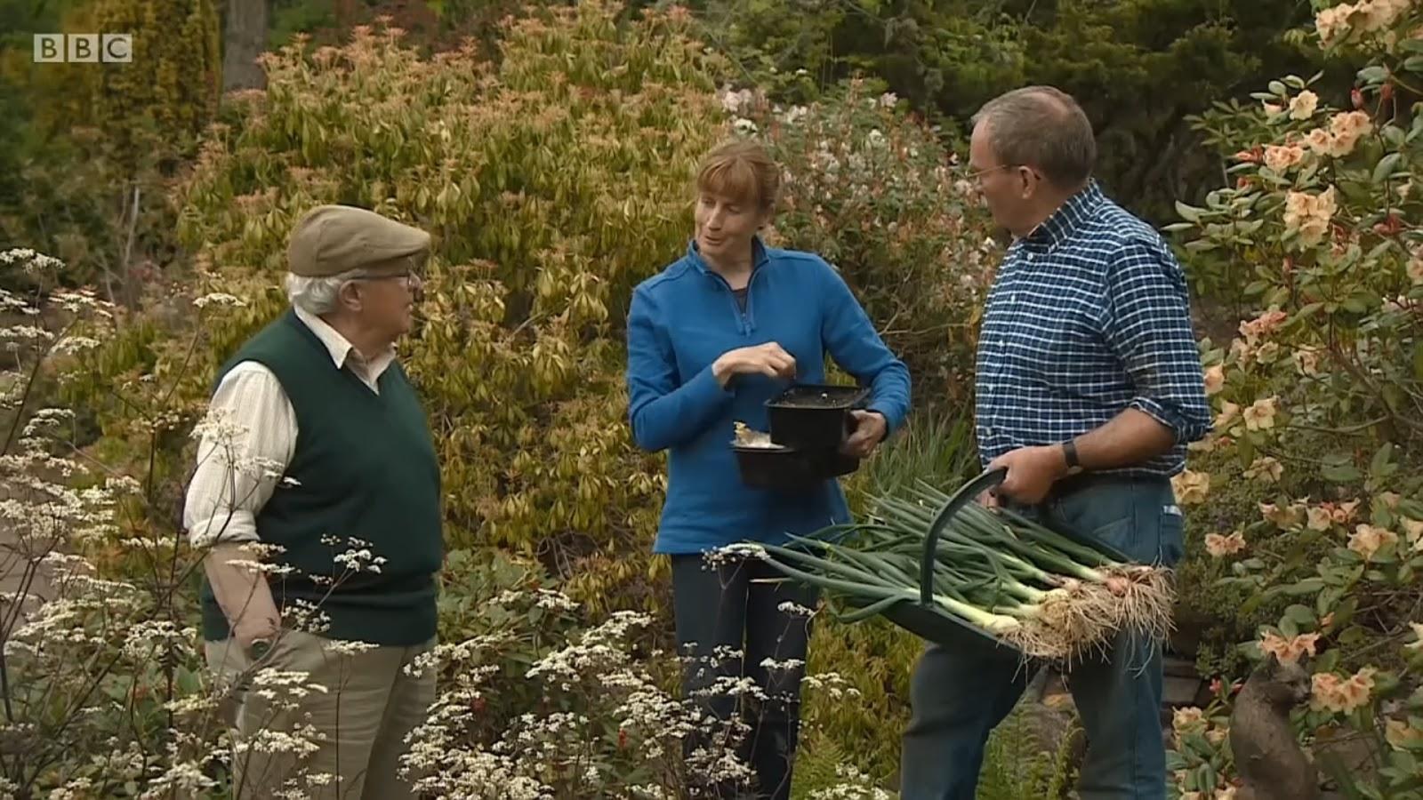 Gardening and Cooking: gardentips