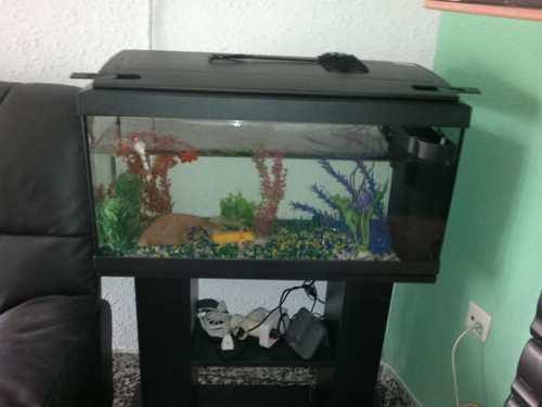 axolotes-habitat-acuario-cuidados