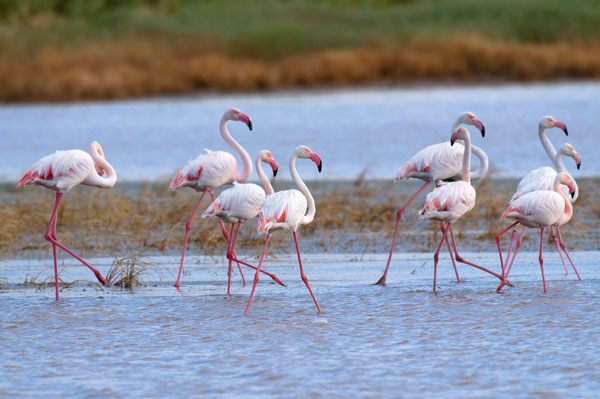 296889e3987a WWF pide un cambio total en la gestión del agua en España | La ...