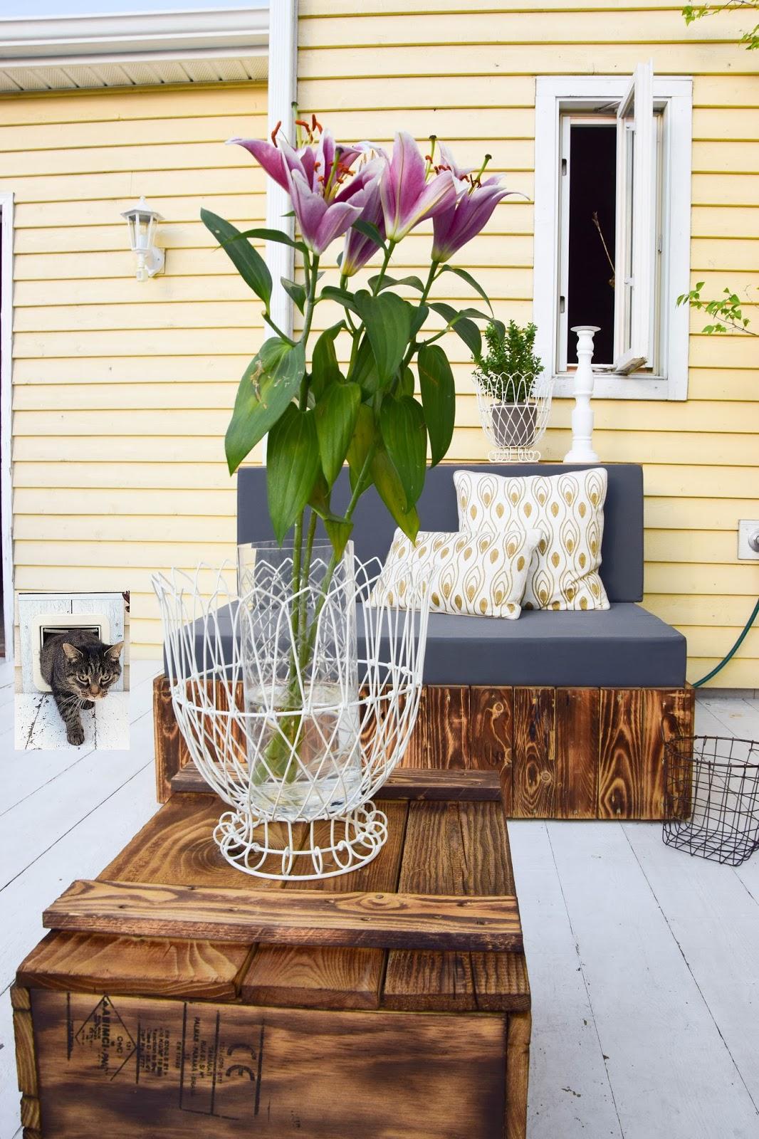 Testbericht Katzenklappe von SureFlap. So kommt eure Katze sicher ins Haus und ihr überwacht alle Aktivitäten per Smartphone. #surepetcare #SureFlapconnect #Anzeige