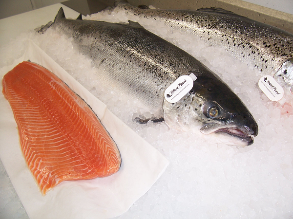 Farmed vs wild caught pollutants and a low omega 3 6 for Farmed fish vs wild
