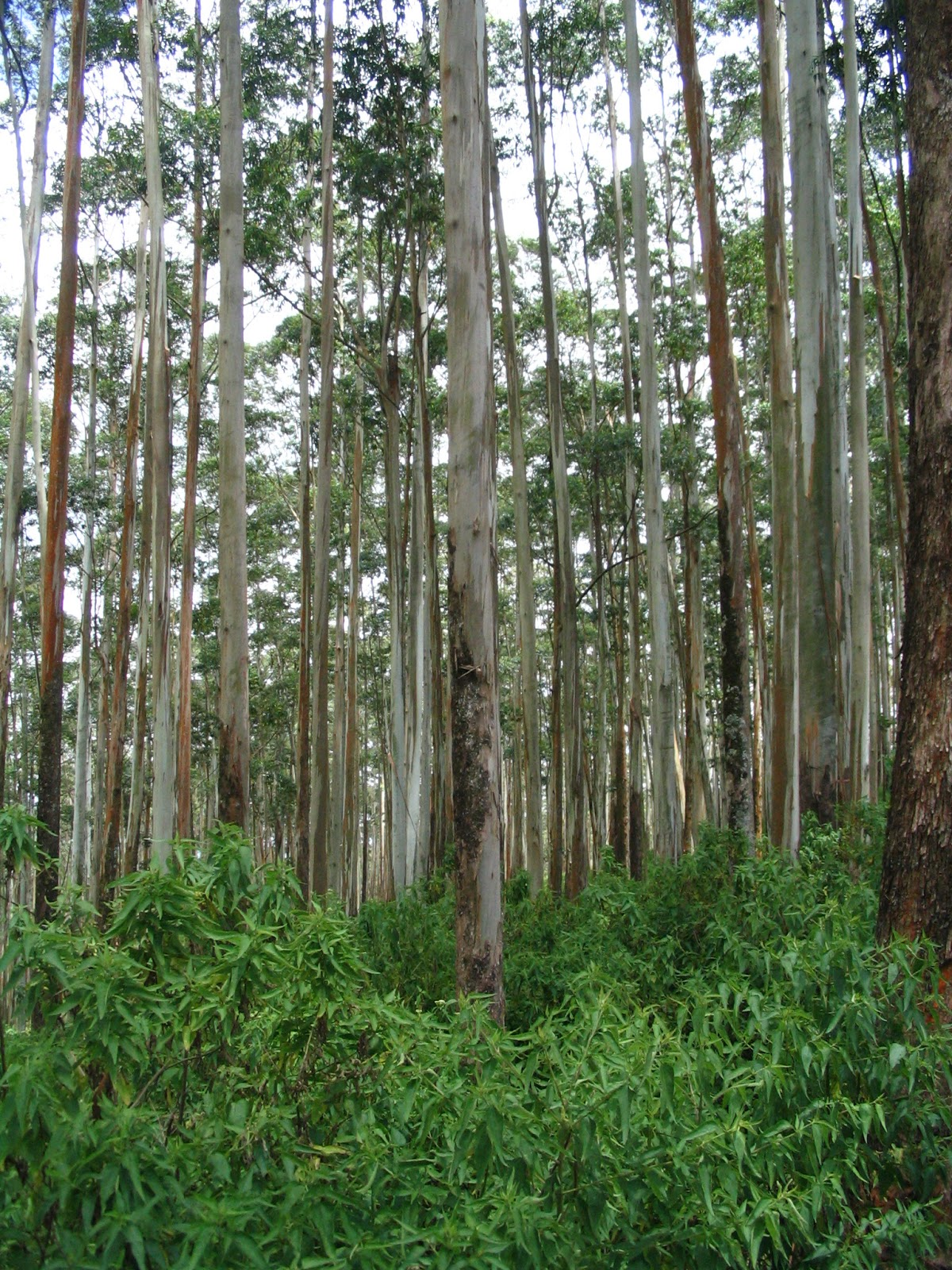 Research Studies On Forest Management In Sri Lanka