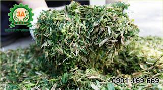 Cỏ sau khi băm nhỏ có chiều dài khoảng 20 – 50 (mm)