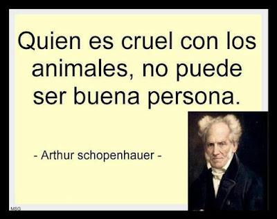 Palabras para El Alma - Pensamientos crueldad animal