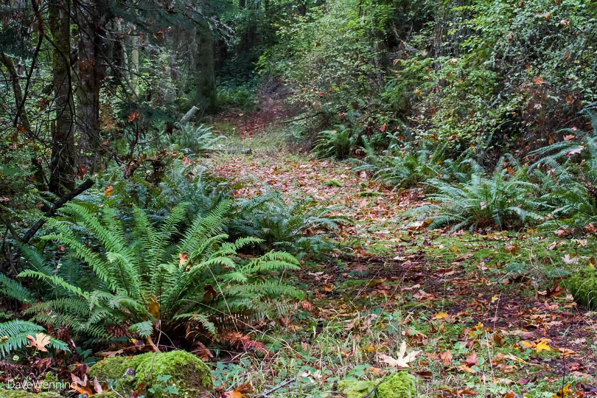 The Old North Trail, Kukutali Preserve