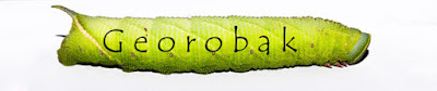 http://georobak.blogspot.com/