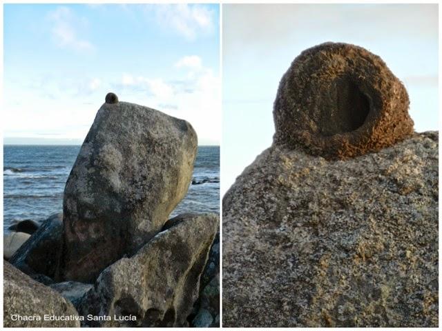 Nido construido sobre una roca junto al mar - Chacra Educativa Santa Lucía