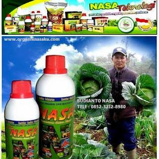 AGEN NASA DI Sawang Aceh Utara - TELF 082334020868