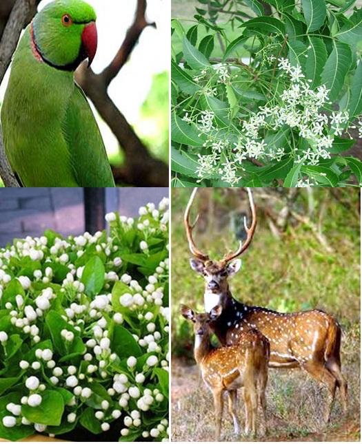 New State Symbols For Andhra Pradesh Gr8ambitionz