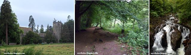 Viaje a Escocia: día 3 Catedral de Dunkeld y bosque del Hermitage