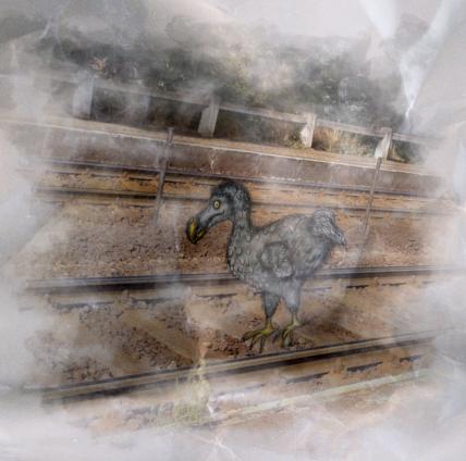 Egy Mauritius szigeti, 1690-ben kihalt dodó a vonatsínek között a napsütésben gyalogol, mivel röpképtelen madár volt, amíg ki nem pusztították.