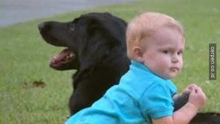 Pasutri Ini Mencurigai Gelagat Sang Baby Sitter Dari Anjingnya dan Ternyata�