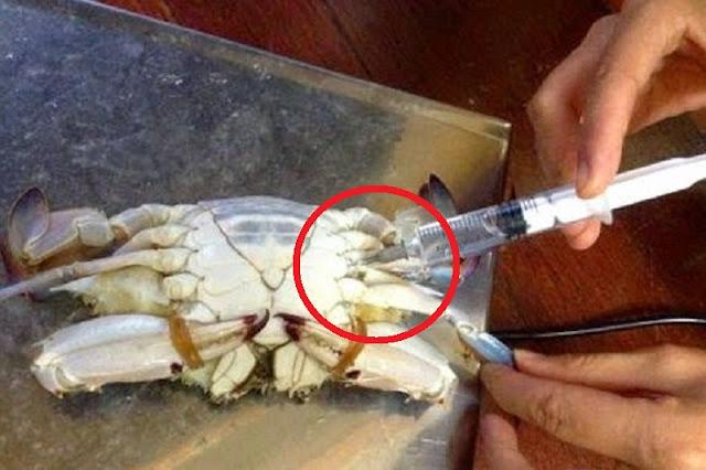 Hati-Hati !Teliti Sebelum Beli Kepiting, Begini Praktek Suntik Pengawet yang Jadi Bibit Penyakit!!